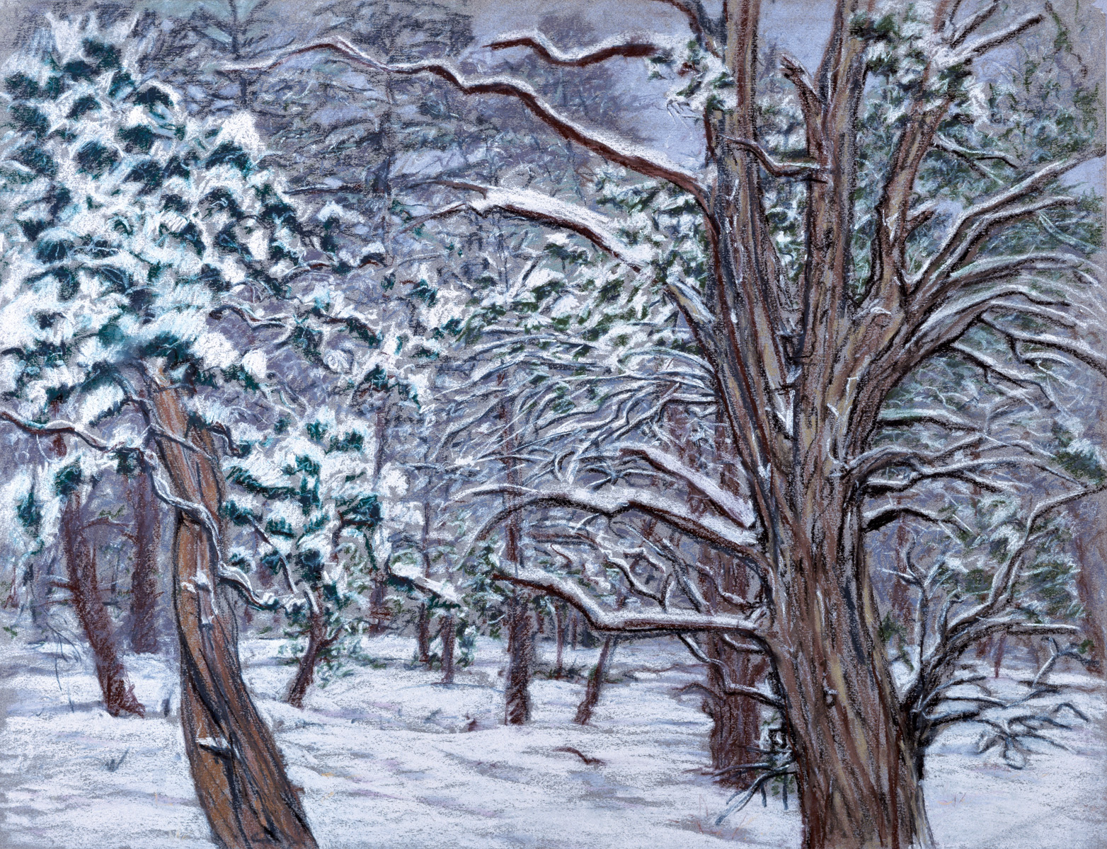 Winter in the Pygmy Forest   25x32 pastel/arches paper 1989